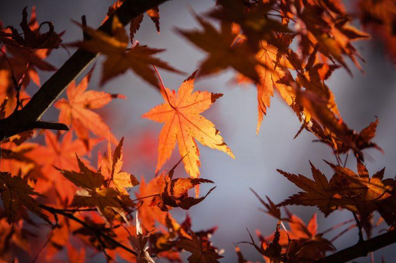 autumn-leave-1415541_1920